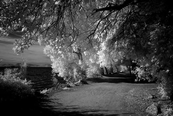 Le sentier du lungolago se métamorphose en une belle allée forestière.