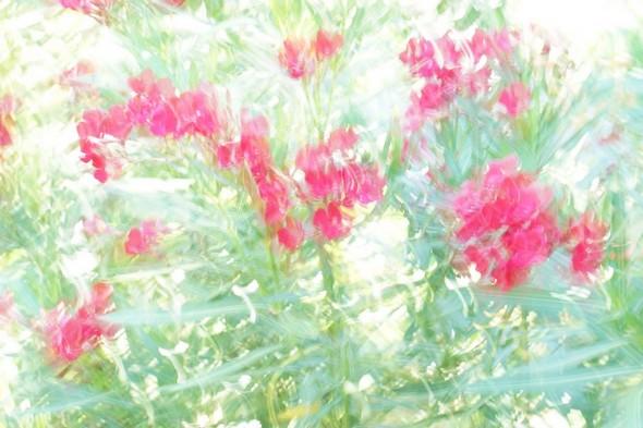 Jardin fleuri  I