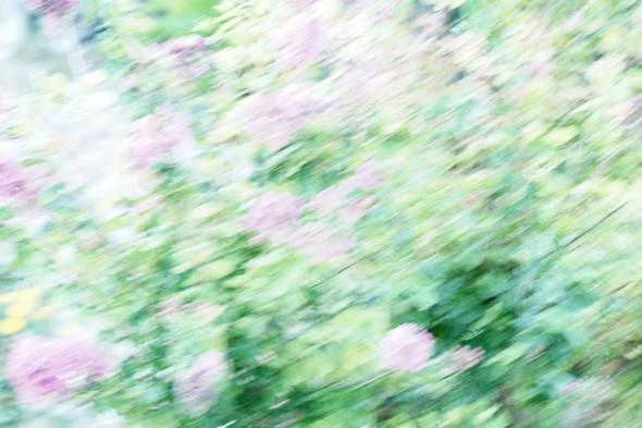 Jardin fleuri  II