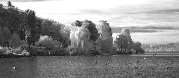 Début d'ensoleillement des jardins de la rive ouest de l'Isola Maggiore, seule rive habitée.