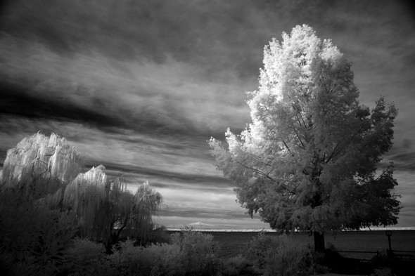 Au début, dans notre jardin, seule les cimes de nos arbres situés au bord du Trasimène sont éclairées...