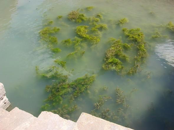 Le long de l'escalier de notre quai   -   MAI 2009, période où le niveau du lac était très bas.
