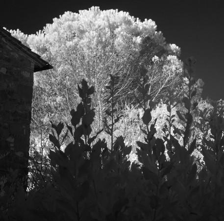 En début de matinée, quelques rayons de soleil commencent à éclairer l'extrémité des jardins...