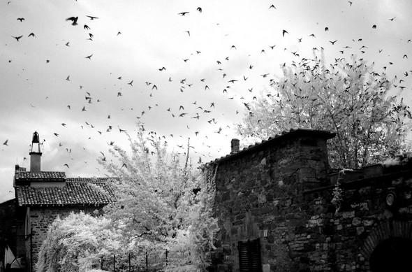 Nuée d'oiseaux après l'orage...