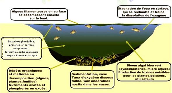 Schéma explicatif de l'eutrophisation.
