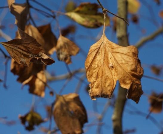 Bokeh bien visible : une feuille bien mise en avant-plan et nette, le reste (feuilles, tiges) de plus en plus estompé.