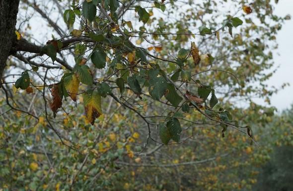 Le bokeh est manifeste ici tout autour de la branche de l'avant-plan.