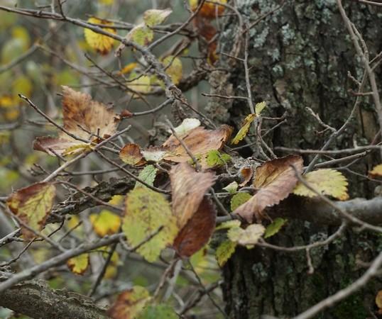 Entrelacs des feuilles et des branches...