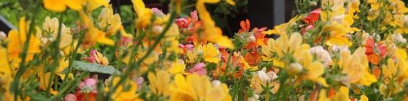 J'aime vivre entouré de fleurs, de couleurs et de lumière...