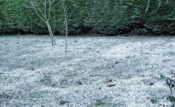 De-ci de-là, le gazon est saupoudré d'une fine pellicule de neige.30 décembre 2014.