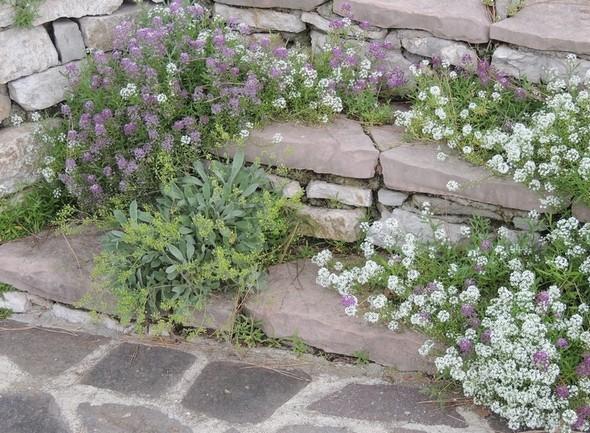 Toutes les structures sont agrémentées de fleurs. Ici, un petit escalier qui unit les deux niveaux de notre jardin.