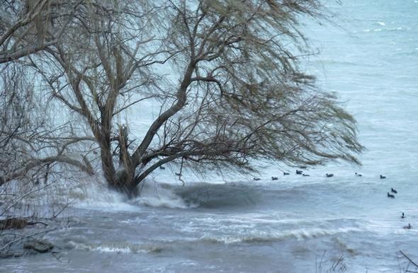 Et les vagues au pied de ce même saule pleureur, ainsi que le ballet bousculé des poules d'eau, renforcent cette information.