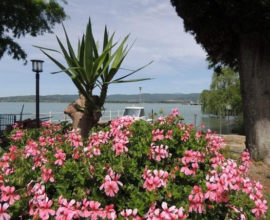 Et avant d'arriver au lac, une margelle également gavée, elle, de fleurs roses.
