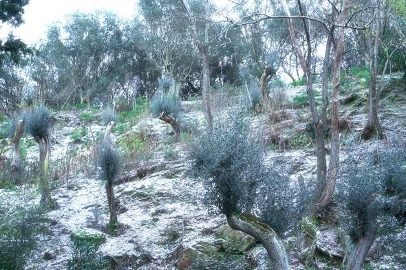Le versant de la colline qui surplombe la via Tre Martiri.