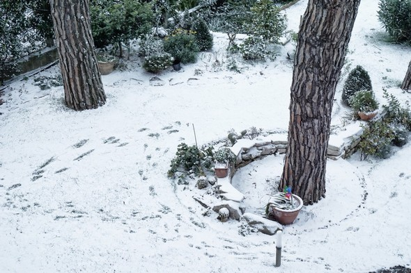 Une autre partie de l'avant du jardin.La base du tronc de deux de nos pins parasols sont bien visibles.