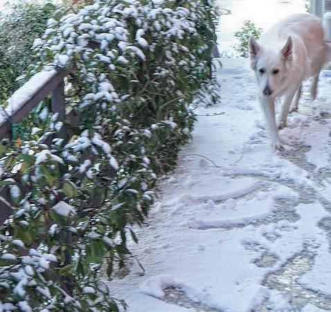 Notre chienne Aïka emprunte cette voie avec prudence.