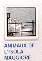 06 ANIMAUX DE L'ISOLA MAGGIORE