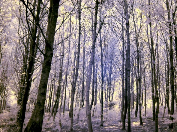 Photo - 7Autre photo du même sous-bois.