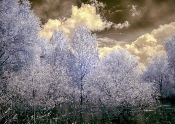 Photo - 13Arrivée au bord du lac Trasimeno.Une anse ceinturée par le petit bois avec des arbres émergeant de l'eau.