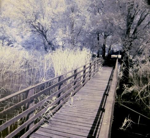 Photo - 14De là, une longue jetée en bois permet de s'avancer plus loin au-dessus du lac Trasimène