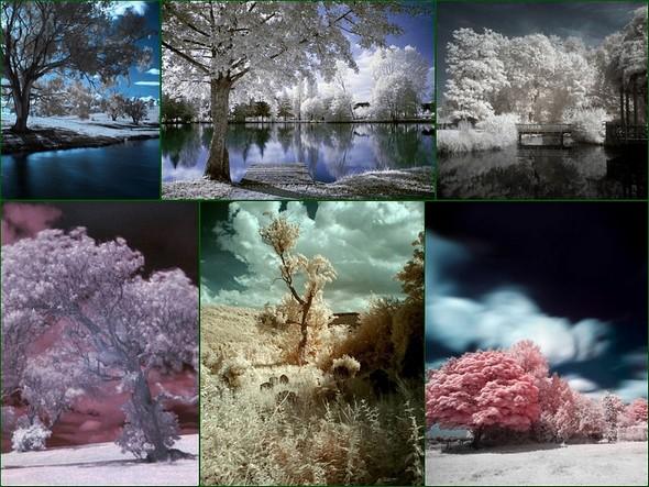 """Méli-mélo de photos infrarouges en """"fausses couleurs"""" trouvées sur le Net."""