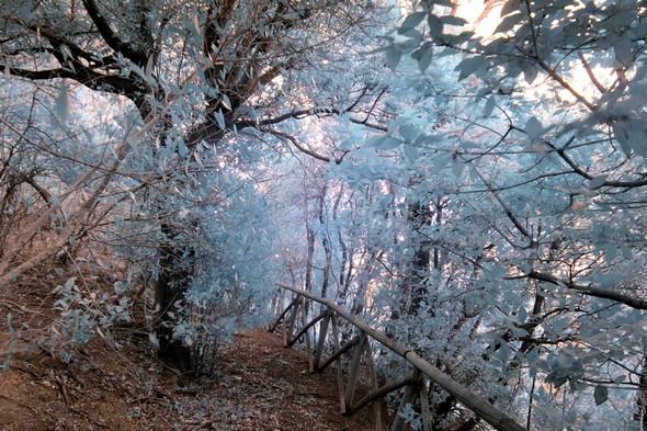 Sentiero dei lecci.Une branche arrachée lors de la tempête des 5 et 6 mars 2015 obstrue partiellement le sentier.