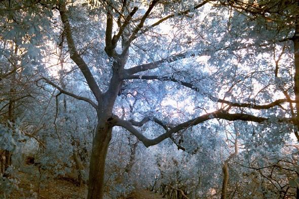 Soleil dans la ramure d'un arbre.