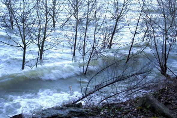La côte est de l'Isola Maggiore est également battue par les vagues qui font souffrir les petits arbres immergés depuis longtemps dans le lac.6 mars,  16:10