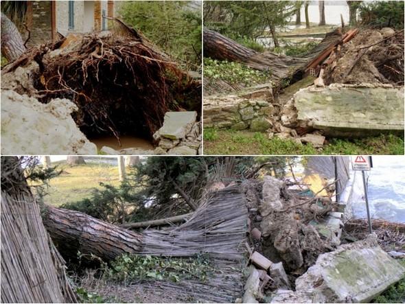 Le déracinement et les dégâts provoqués au niveau du muret du jardin.