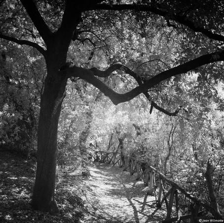 Un peu plus loin, le sentier se rétrécit et commence à descendre. La partie boisée, à gauche, s'éclaircit et le type d'arbres change chênes).
