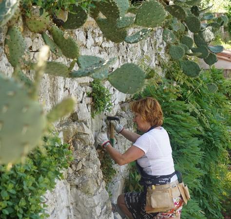 L'artiste en pleine création. Taille des câpriers sur le mur le long de notre rampe d'accès, après le portail. 12 mai 2015.