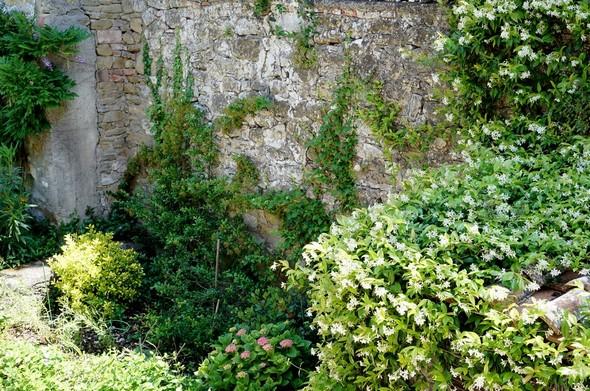 Le mur de soutènement avec, dans la quadrant inférieur droit,  le début du massif de jasmin.