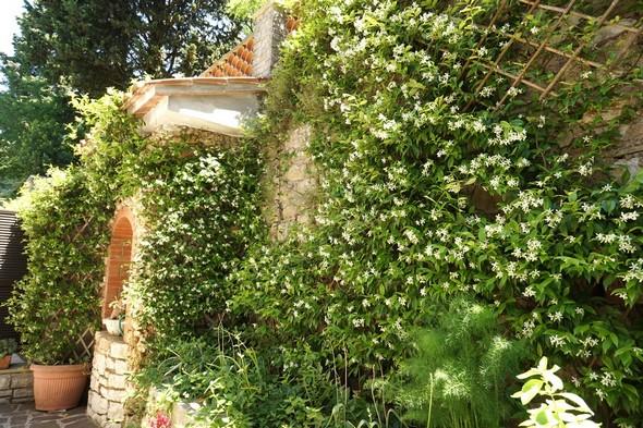 Le <strong>massif 3 de jasmin</strong>, face à la petite terrasse pour certains repas.<br />Dans le coin supérieur droit, on observe le treillage qui a aidé le jasmin dans son ascension jusqu'en haut du mur de soutènement.