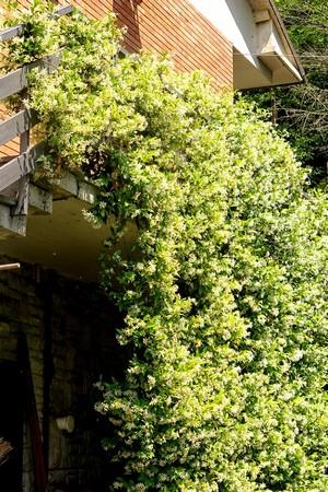 Ce massif ferme partiellement l'espace en-dessous de l'escalier extérieur, créant ainsi une réserve pour tout le matériel de jardinage.