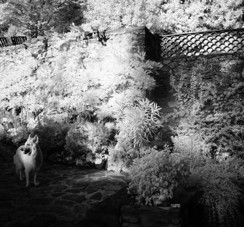 """Notre chienne Aïka m'attend pour notre départ en promenade de  """"chasse à l'image""""..."""