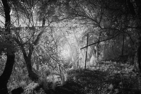 La clôture de l'oliveraie...<br />On commence à entrevoir le lac Trasimène et le rayonnement du soleil à l'ouest !