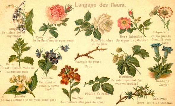 Carte postale ancienne illustrant le langage des fleurs.