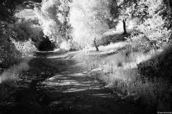 """Tout au bout du sentier, le """"trou noir"""" correspond à l'extrémité de la strada, un passage plus sombre car placé sous une véritable voûte végétale.  ."""