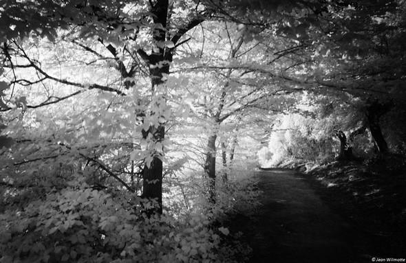 """Du côté gauche de la strada (en descendant), avant l'amorce de la pente de la strada, le léger rideau d'arbres qui tamise encore la lumière de """"l'heure d'or""""."""