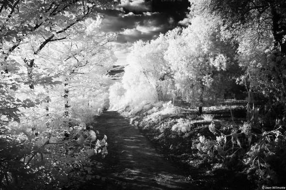 On arrive au point de naissance de la forte déclivité de la strada... Du côté gauche, Réduction de l'arborescence. Côté droit, les oliviers sont remplacés par de massifs arbustes que le soleil exalte à souhait.