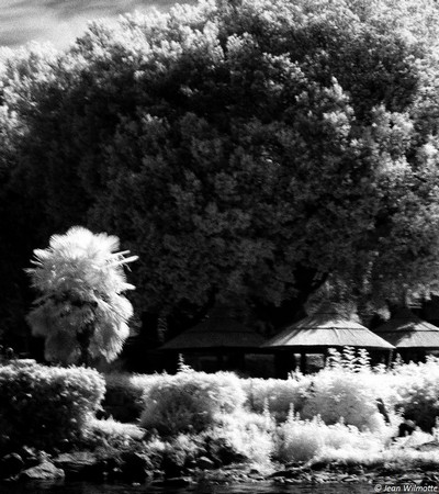 """Piazzetta San Francesco, au pied du débarcadère : à gauche une partie du petit squaredédié aux pêcheurs de l'Isola.à droite, l'extrémité du jardin du bar """"Il Molo"""" avec ses parasols en paille.07:54.."""