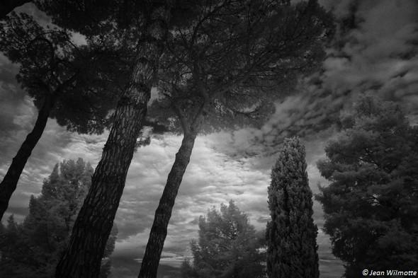 Aube.Coin de ciel entre les arbres de notre jardin.11/08/2015   -   06:11