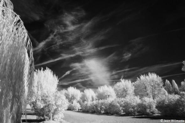 Sillons du perpétuel labourage aérien du ciel au-dessus du lac Trasimène.Parking de Tuoro-Navaccia.19/09/2015 - 07:49.
