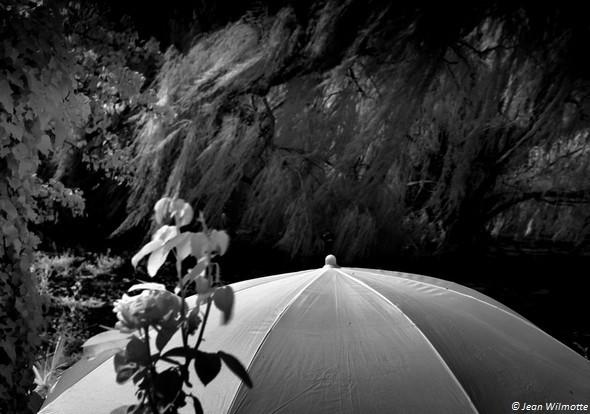 Parasol dans notre jardin à l'Isola Maggiore.25/08/2015 - 10:10.