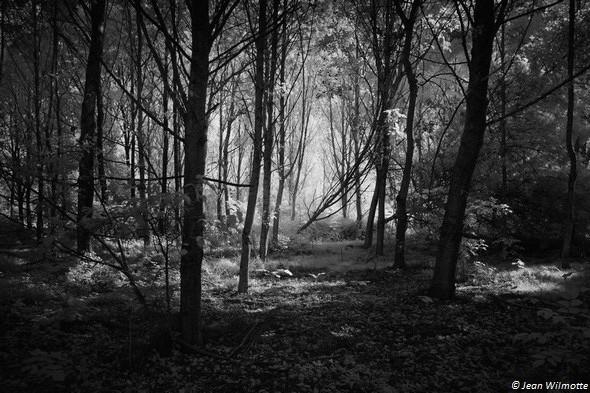 Jeu de lumière dans le sous-bois à l'est de Tuoro-Navaccia.19/09/2015 - 09:23.