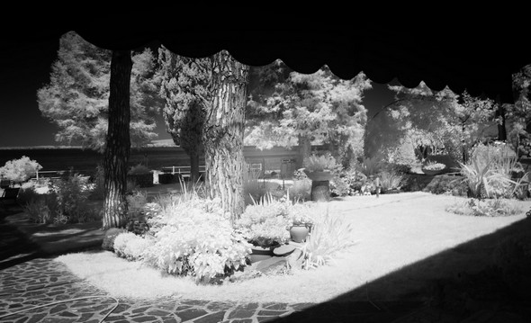 Du salon de jardin, vue sur une petite partie du jardin.14 juillet 2015   -   9:26