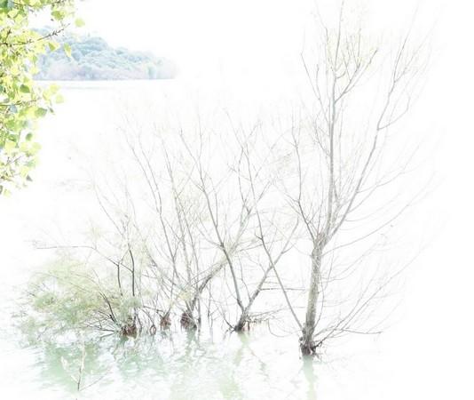 Arbres immergés suite à l'élévation du niveau du lac.Esplanade de la statue de saint François.Isola Maggiore.Coin supérieur gauche : pointe sud de l'Isola Minore.22 août 2014.