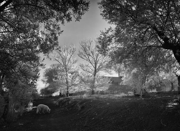 Toujours dans l'oliveraie du sommet. On se rapproche de la chiesa di San Michele Arcangelo.Coin inférieur gauche, notre chienne Aïka.30/10/2015     16:54.