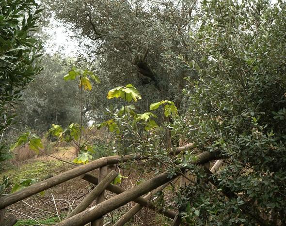base de l'escalier qui mène de la strada panoramicadel Molino au Viale Marchesa Isabella.