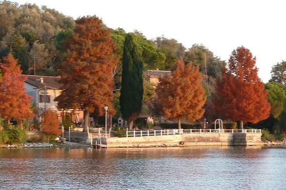 A l'automne, nos trois pins du Mississippi, situés tout au bord du lac, ressortent nettement de la notalité générale de la végétation de l'Isola Maggiore.10 novembre 2011